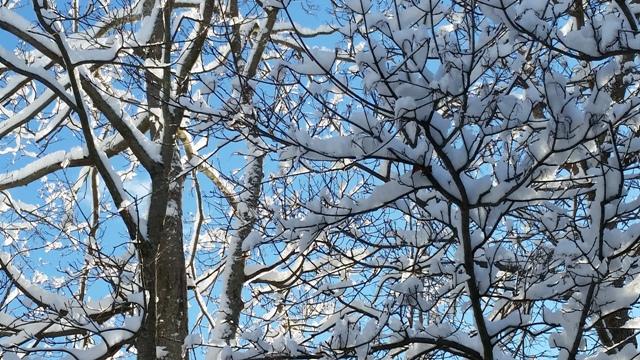 Snowbirch 2.jpg