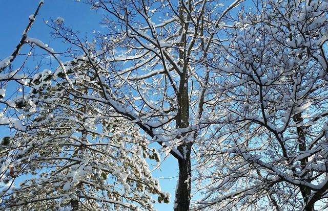 Snowbirch 3.jpg