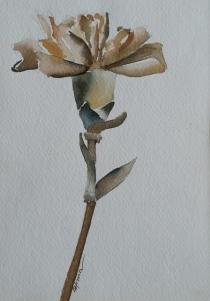 russian-carnation